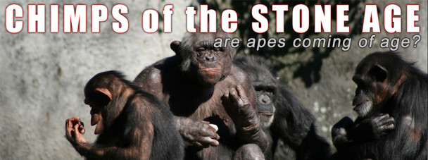 chimps-of-the-stone-age