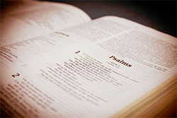 Bible Reading: Engage the Text