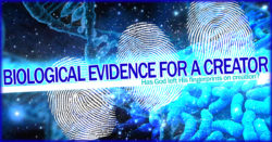 Biological Evidence for a Creator