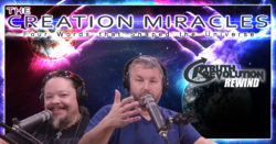 Rewind: The Creation Miracles